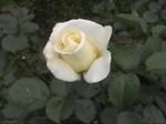 Spring_037_2