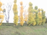 2010nov_059