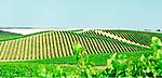 Wine1_2